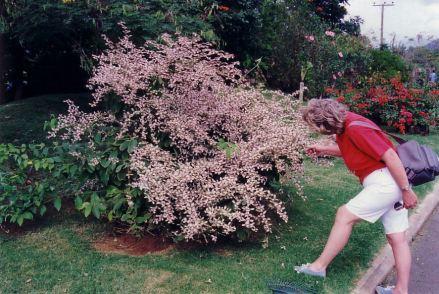 e8 Mo admiring bush