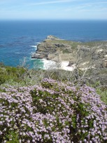 Fynbos at CapePoint