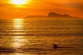 Gansbaai by Dana Allen - PhotoSafari