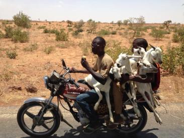 Goat express