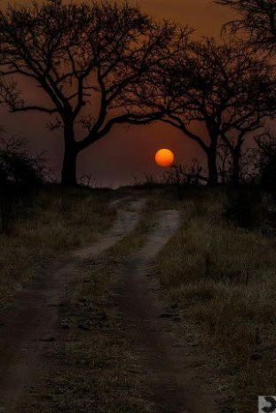Lovely mood in this one by Timothy Griesel...a bushveld sunset scene...
