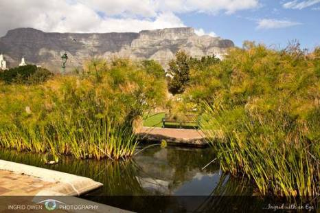 Reflections of Table Mountain from The Company Gardens