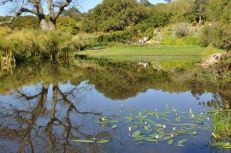 This photo is of the main pond at Kirstenbosch with reflections of the oak, papyrus and aloes.