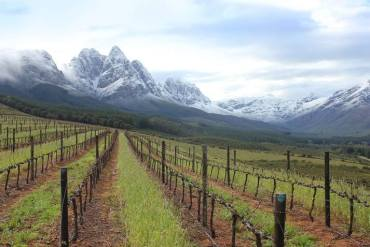 Vineyards and white mountains tips - not a regular site here in the Valley. — at Stark-Condé Wines.