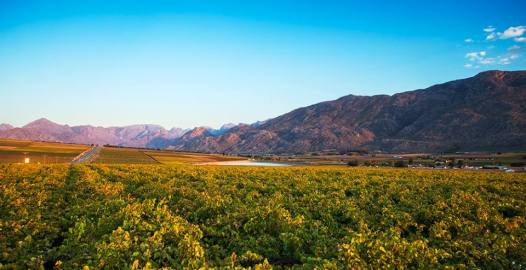 vineyards in De Doorns