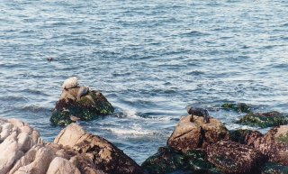 h1-seals at Monterey-jan 89
