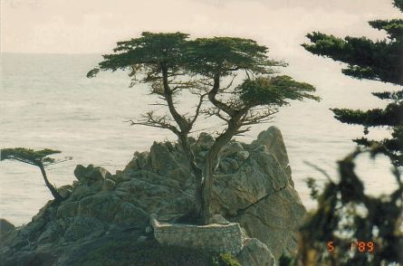 i4-pebble beach-jan 89