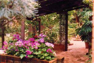 Image22a back garden