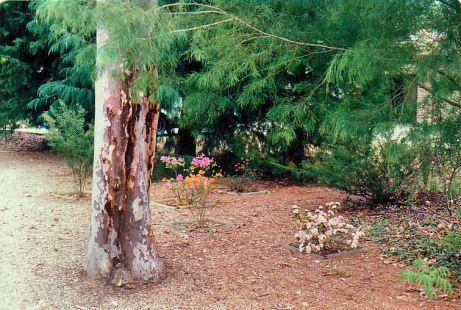 Image25c front garden