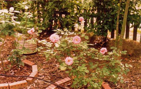 Image2c rose bed