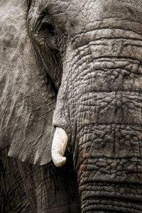 aa Elephant texture