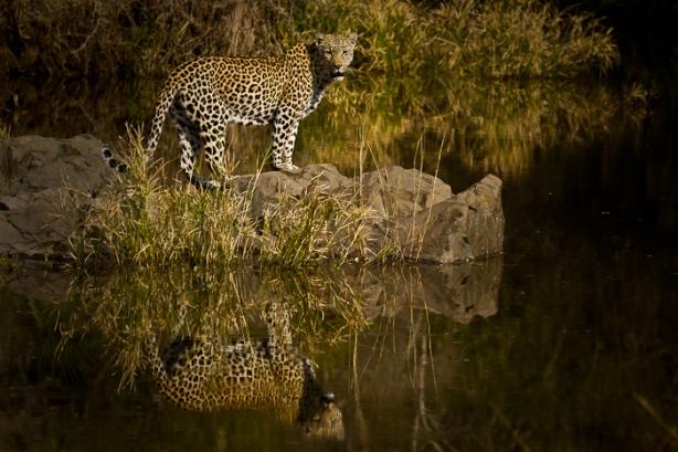 Dudley Riverbank female at Tugwaan River 2 - 5Oct12 Londolozi