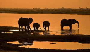 Dusk at Chobe River - Kelly Okavango
