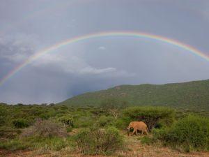 elephant-rainbow_12665_990x742
