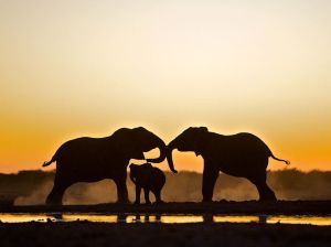 elephant-trio-etosha-national-park_48281_990x742