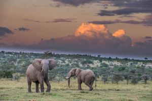 Elephants and Thunderheads, Segera Ranch, Kenya Michael Poliza Photographer