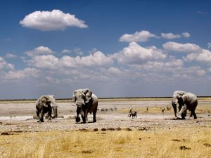 elephants-etosha-national-park_12664_990x742