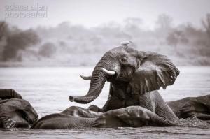 Mana Pools, Zambesi River by Dana Allen - PhotoSafari