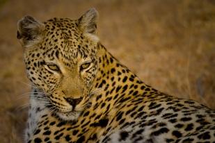 Maxabene female - 5Oct12 Londolozi