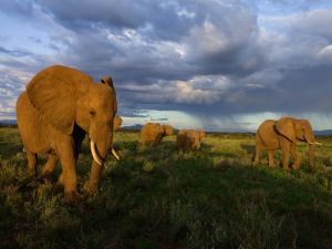 samburu-elephants-group-kenya_28396_990x742