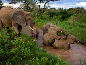 samburu-elephants_3642_990x742