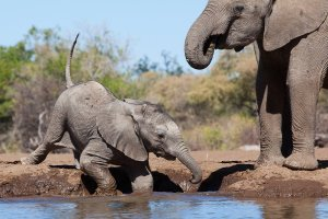 Waterhole Mashatu - Isak Pretorius Wildlife Photography