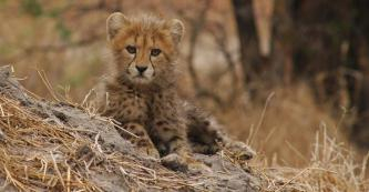 Baby at Okavango