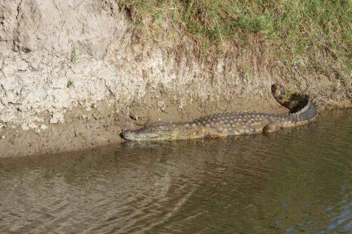 Chitwa Chitwa c3