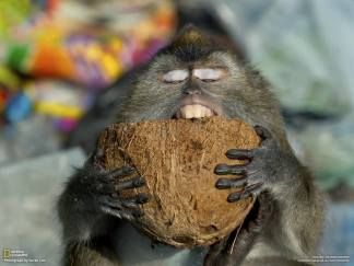 Coconut feast