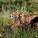 Cub and Mum at Phinda by Andrew Nicholson
