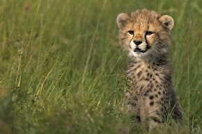 cub_grass_large Singita