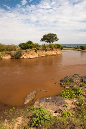 Mara River Maasai Mara - Isak Pretorius Wildlife Photography