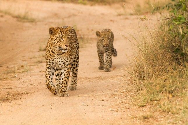 mashaba and cub