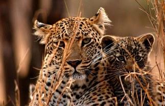 Nyaleti-and-cub