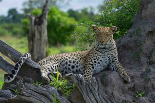 Okavango (Africa, through my lens)
