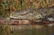 Okavango - © Copyright 2011 James Goodchild