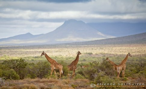 African panorama by Photo © Etienne Oosthuizen