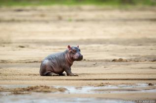Baby by Will Burrard-Lucas