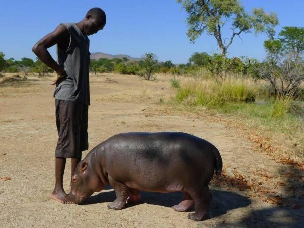 Douglina at Chipembele Wildlife Education Trust