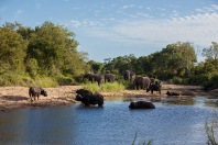 Elephant-and-buff-at-Marthly-Pools