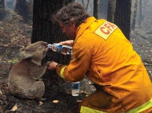 Firefighter in Australia