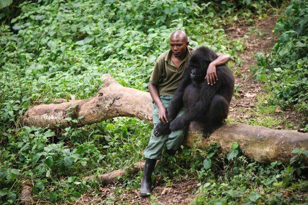 Gorilla and friend