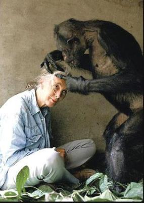 Grooming session for Dr. Jane Goodall
