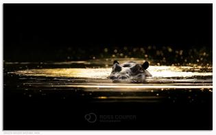 Guardian - Ross Couper Photography