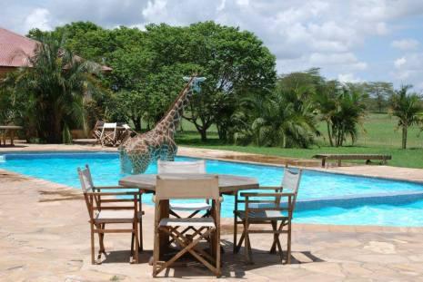 Monduli the Giraffe