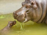 Mother and baby sharing food