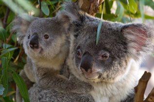 Mum and Joey