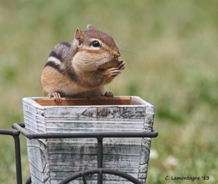 My nut