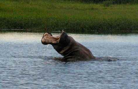 okavango-delta-y6tgye (1)