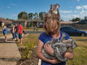 orphan-koalas-sartore_55583_990x742